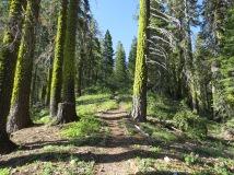 Clair Tappan Nature Trail
